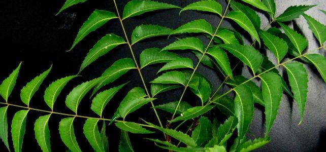 Niem-Baum – Der Wunderbaum